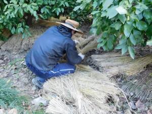 神野農園 敷き藁